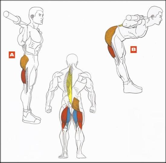 Как накачать мышцы спины позвоночника 185